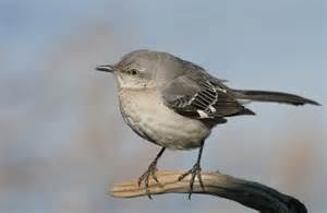 feathered friends forum nyc long island bird question
