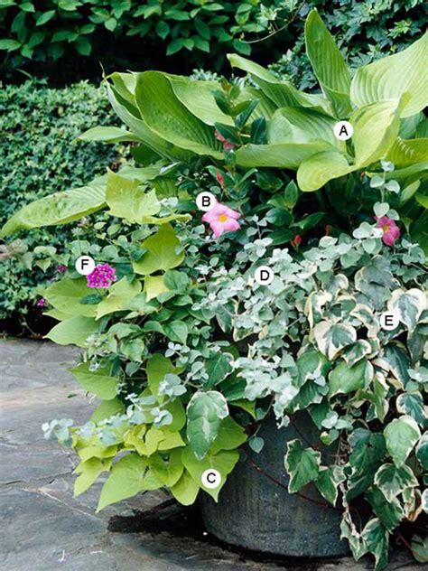 shade container garden hosta and shade container garden honeysuckle