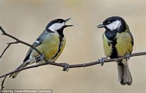 the birds and other birds can speak in phrases to convey complex messages to each other daily mail online