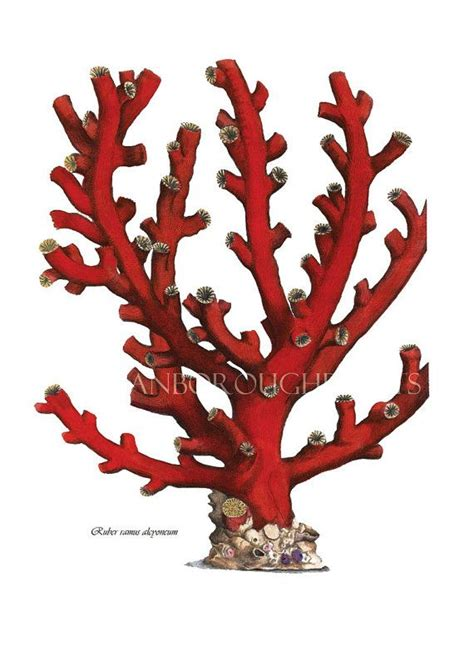Red Branch Sea Coral Beach Bathroom Makeover By | 212 best images about coral on pinterest antiques coral