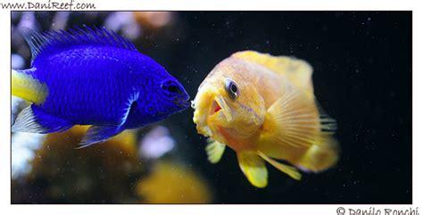 alimentazione dei pesci alimentazione dei pesci the fish feeding danireef