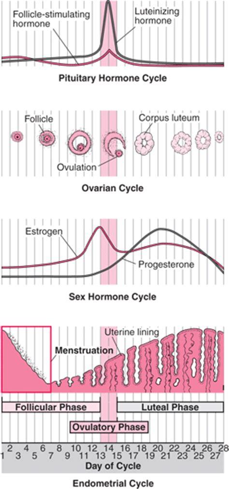 Deeva Menstrual Pad Type Day menstrual cycle s health issues merck manuals