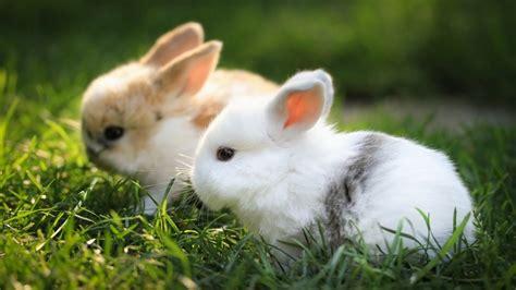 Buku 101 Tips Memlihaa Hewan Peliaharan tips menyatukan kelinci agar tidak berkelahi