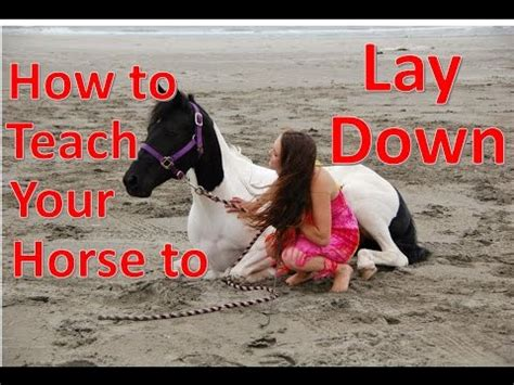 how to teach a to lay clip hay how to teach a to lay naturally without ropes tutorial