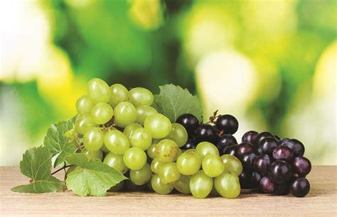 uva da tavola italia uva da tavola simposio internazionale in italia