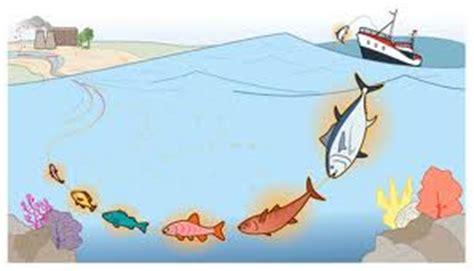 alimentos con mercurio mercurio en alimentos y peces blog ozono 21