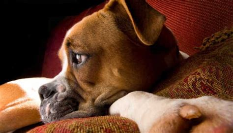 can dogs tell when you are dogs really can tell how their owners are feeling