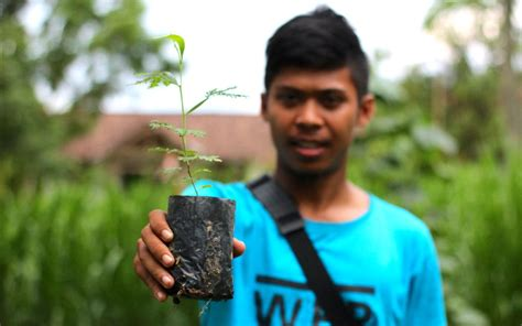 Bibit Kayu Akasia hutan rakyat mongabay co id