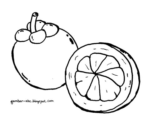 mewarnai gambar buah manggis belajar mewarnai