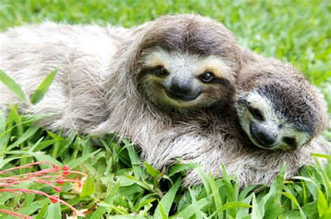 sloth going to the bathroom about created by emily gilmore