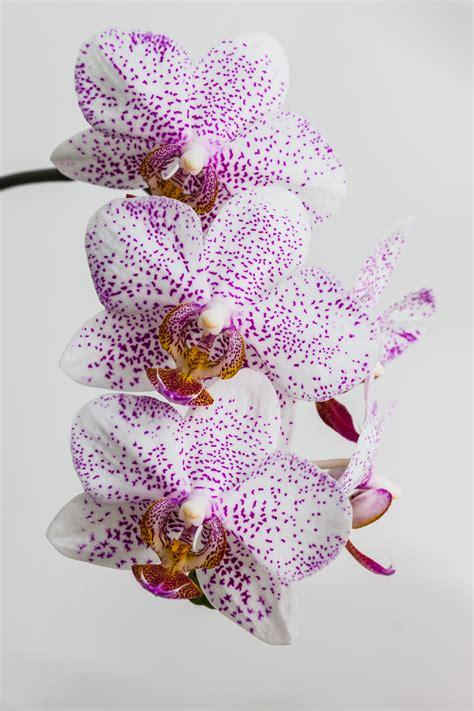orchidea in da letto 12 piante perfette per la da letto fito