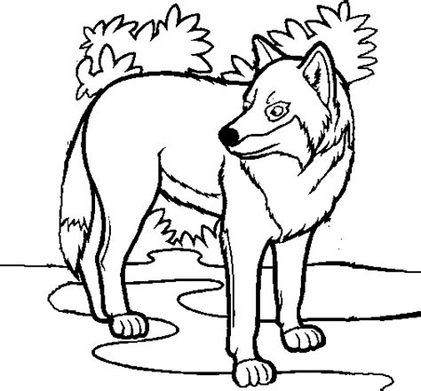 imagenes para colorear lobo free coloring pages of tigre bianca