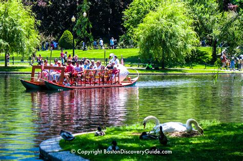 swan boats boston hours boston swan boats top attraction boston discovery guide