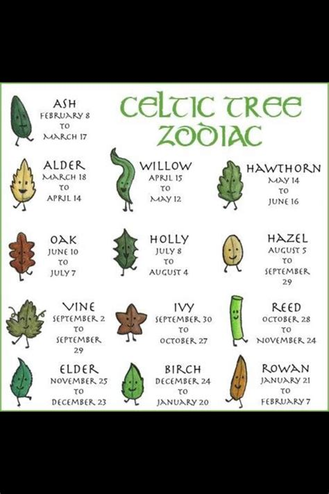 tree meanings celtic tree zodiac symbols and their meanings pinterest
