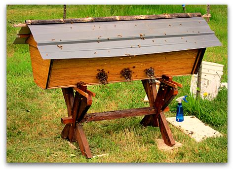 top bar bee hives beehive sequel deluxe top bar hive for my bees