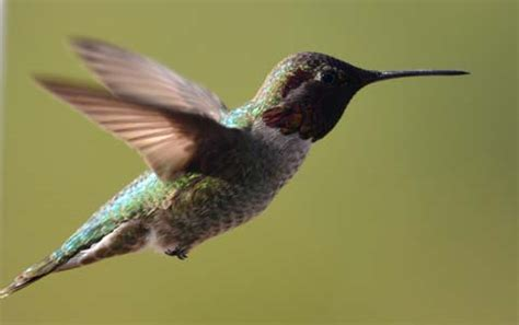 to catch a hummingbird on roads less traveled