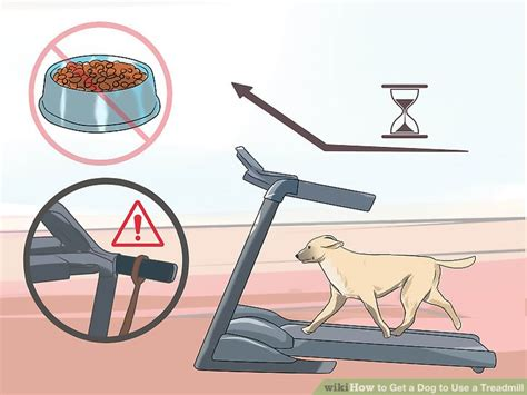 how to get a dog to use the bathroom outside how to get a dog to use a treadmill 10 steps with pictures