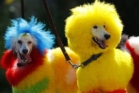 what colors can dogs see dogs can see in color scientists determine canines can