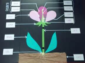Homemade Plant Food For Cut Flowers science flower anatomy 3d project stories to read
