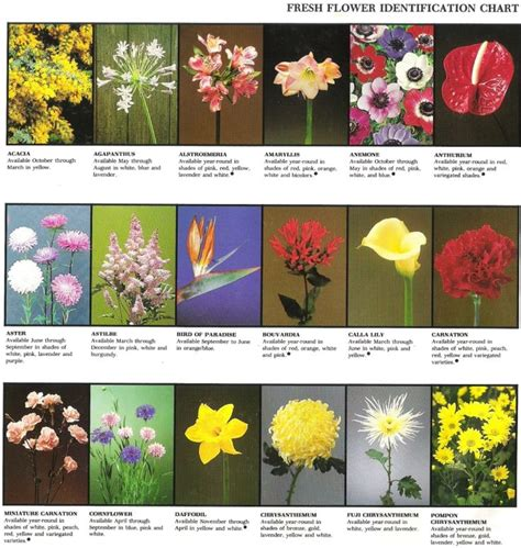 Garden Answers Plant Id Best 25 Plant Identification Ideas Only On