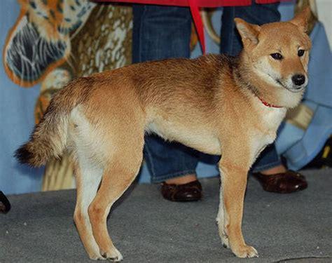japanese breeds japanese breeds