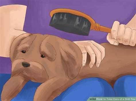 how to take care a shih tzu 3 ways to take care of a shih tzu wikihow