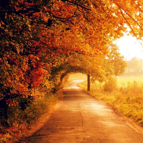 fall autumn autumn scenery sunhealers