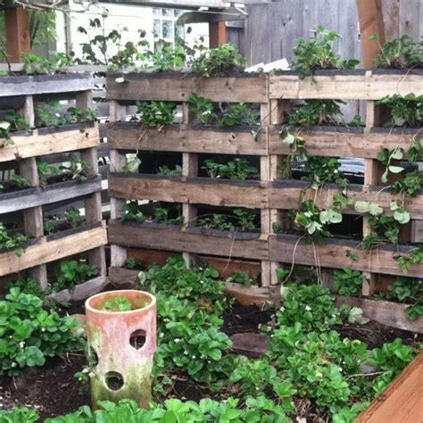 strawberry bed ideas reclaiming pallets to make vertical strawberry bed
