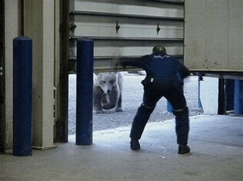 Garage Door Getting Stuck 12 Scary Encounters With The World S Deadliest Animals