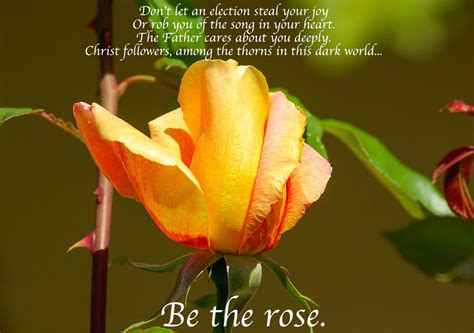 among the roses there are thorns a cinnamon black book books delight in god i my christian testimony tips for