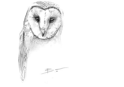 Barn Owl Sketch By Benpostmus On Deviantart Barn Owl Drawing