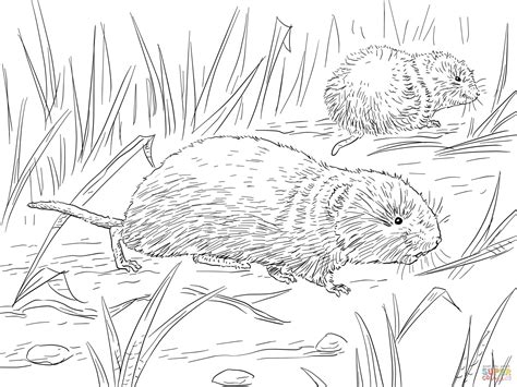 desert mouse coloring page meadow vole coloring page free printable coloring pages