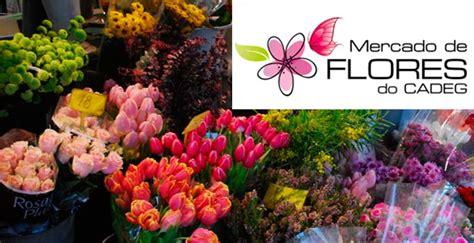 cadeg flores plantas pre 231 os decorart lojas - Decorart Flores Do Cadeg