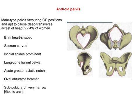 android pelvis bony pelvis