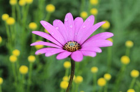 flowers benjamuna s blog