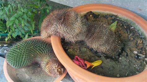 wann sterben legionellen ab kaktus abgebrochen wie retten pflegen schneiden