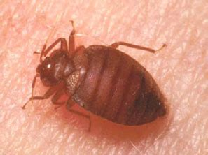 is it normal to see bed bugs after treatment traveler q a preventing bed bugs from hitchhiking to