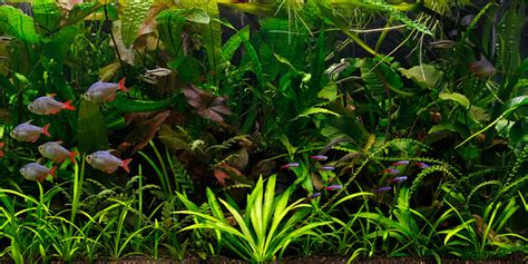 Layout Aquascape Understanding Jungle Aquascaping Style The Aquarium Guide