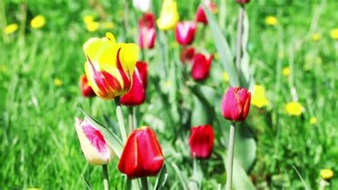 sfondo fiori primaverili fiori primaverili colorati per sfondo stock