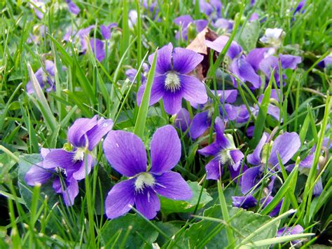 violet s kodaly and orff music teacher s blog violets