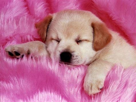 pup animal puppy babies pets and animals photo 16883275 fanpop