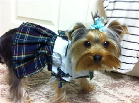 best shoo for yorkie puppies best shoo for yorkies 64 best clothes images on dresses