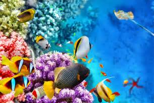 great best great barrier reef cruise tips cruise critic