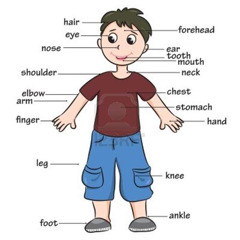 body parts pictures for kindergarten kids coloring