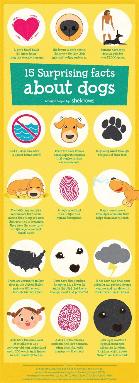 dogs facts 17 best ideas about dogs on doge breed dogs breeds and i dogs