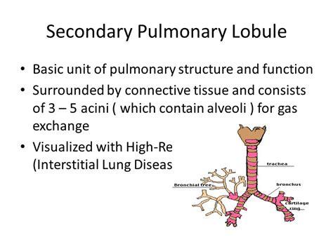 Similiar Pulmonary Lobule Keywords