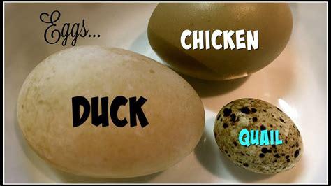 Clinical Granola 100g Murah quail egg vs en egg nutrition facts nutrition ftempo