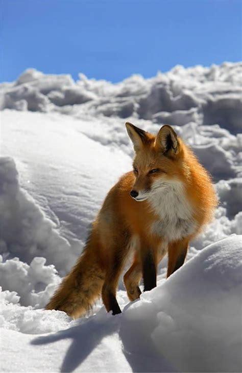 imagenes animales bellos fotos de animales salvajes