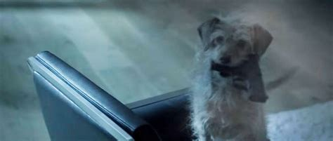 wick puppy the wick trailer is exactly what you want it to be fandango