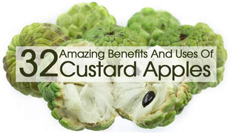 Foods From Around The World 32 amazing benefits and uses of custard apples